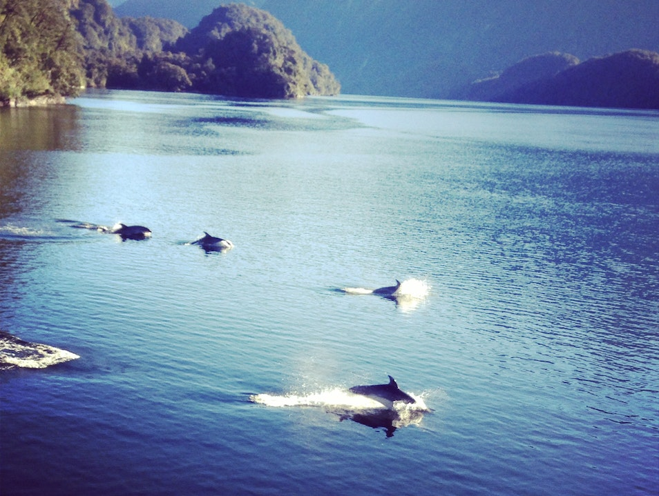 Overnight Cruise on the Incredible Doubtful Sound