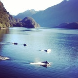 Doubtful Sound Daytime & Overnight Cruises