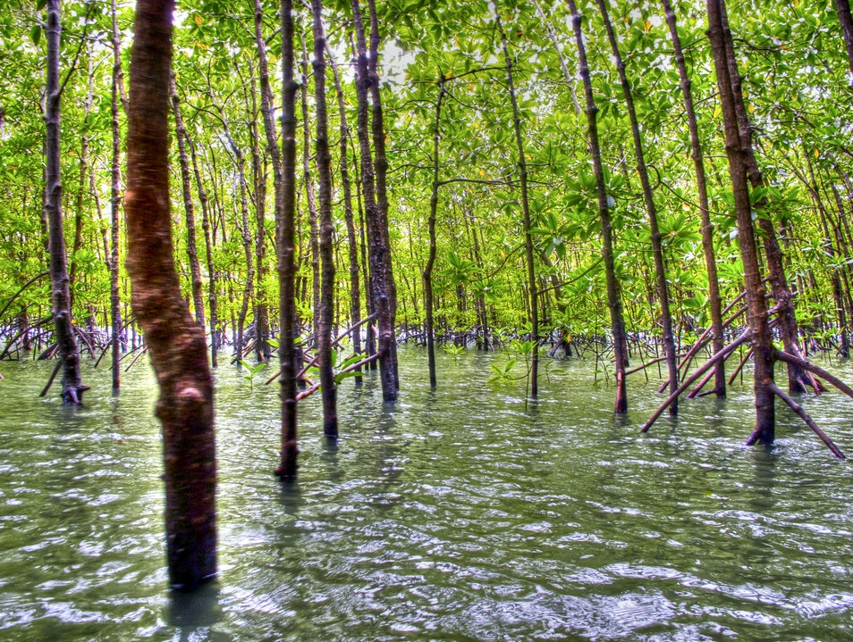 Water forest  Thalang  Thailand