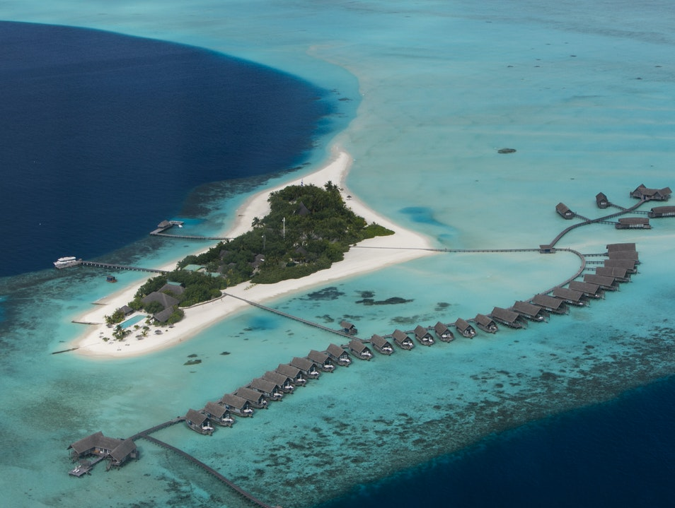 Help Como Resorts Save Coral  Kaafu Atoll  Maldives