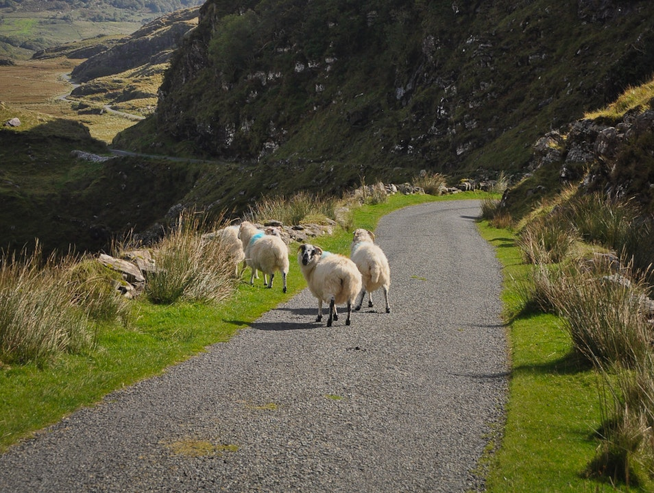 Disturbing the Locals While Cutting Across the Ring of Kerry