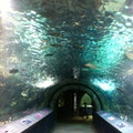 Newport Aquarium Newport Kentucky United States