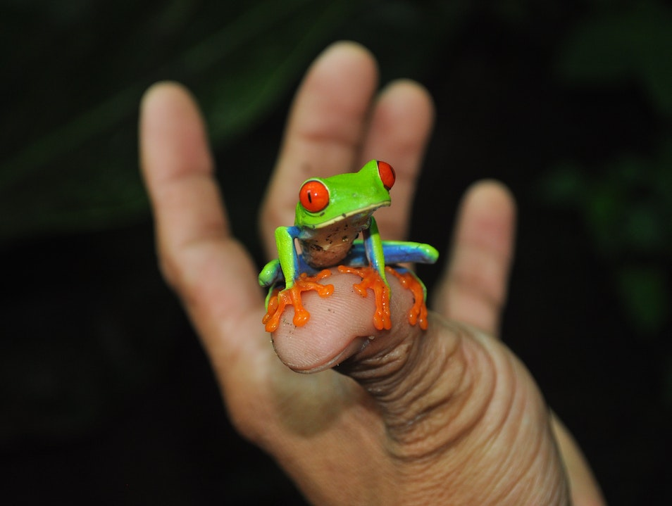 Frogs and More in the Mountains of Nica