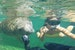 Snorkeling in Blue Springs, Florida