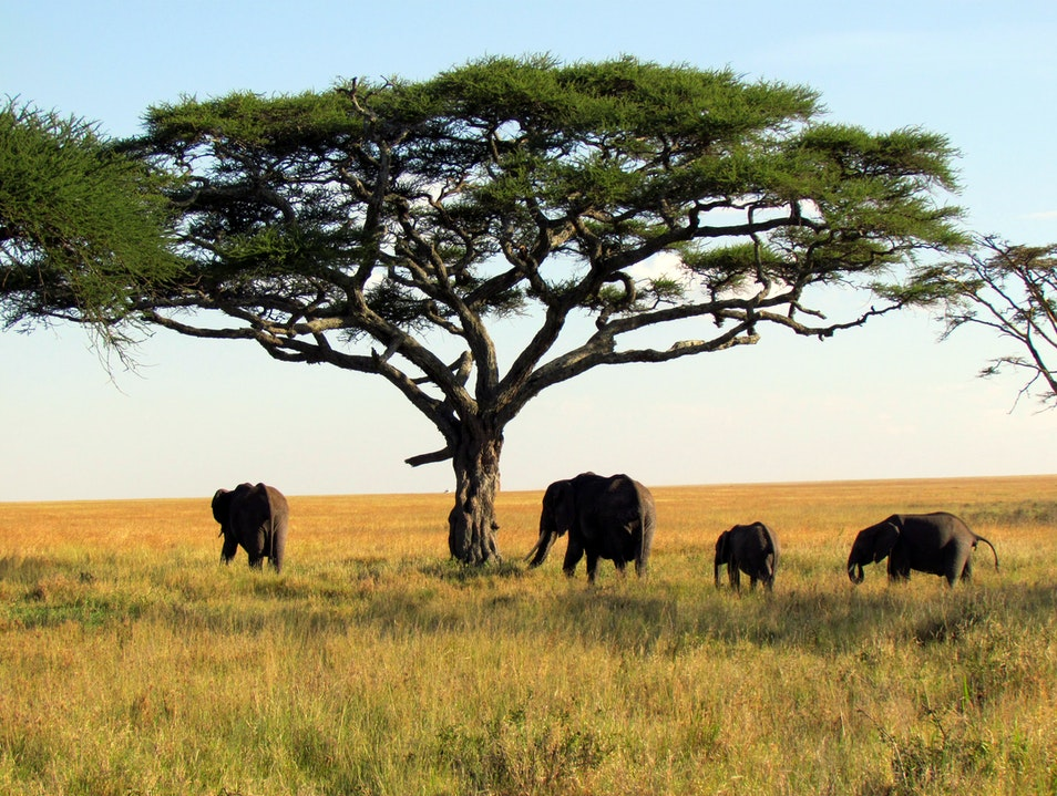 The Best Places to Spot Wildlife in Tanzania