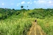 The Trail of Campuhan Ridge Walk Ubud  Indonesia
