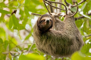 Sloth Sanctuary - Costa Rica
