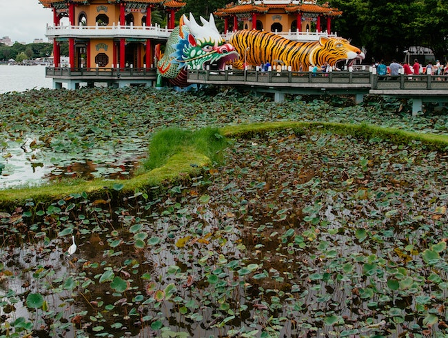 Take a Walk Around Lotus Pond