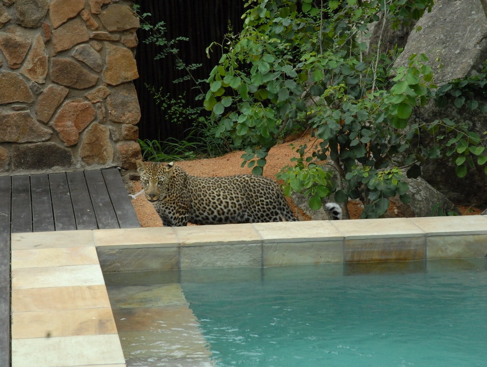 Private plunge pool...leopard included. Kruger Park  South Africa