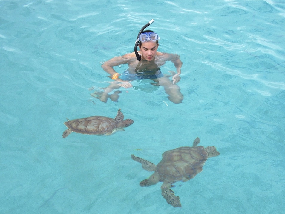 Swimming with Turtles in Bridgetown Barbados