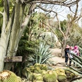 Moorten Botanical Garden and Cactarium  Palm Springs California United States