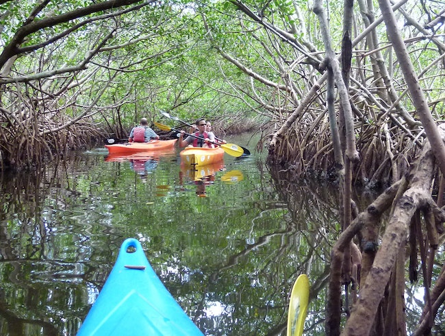 Kayaking Weedon Island Preserve, Minutes from downtown St Petersburg, FL