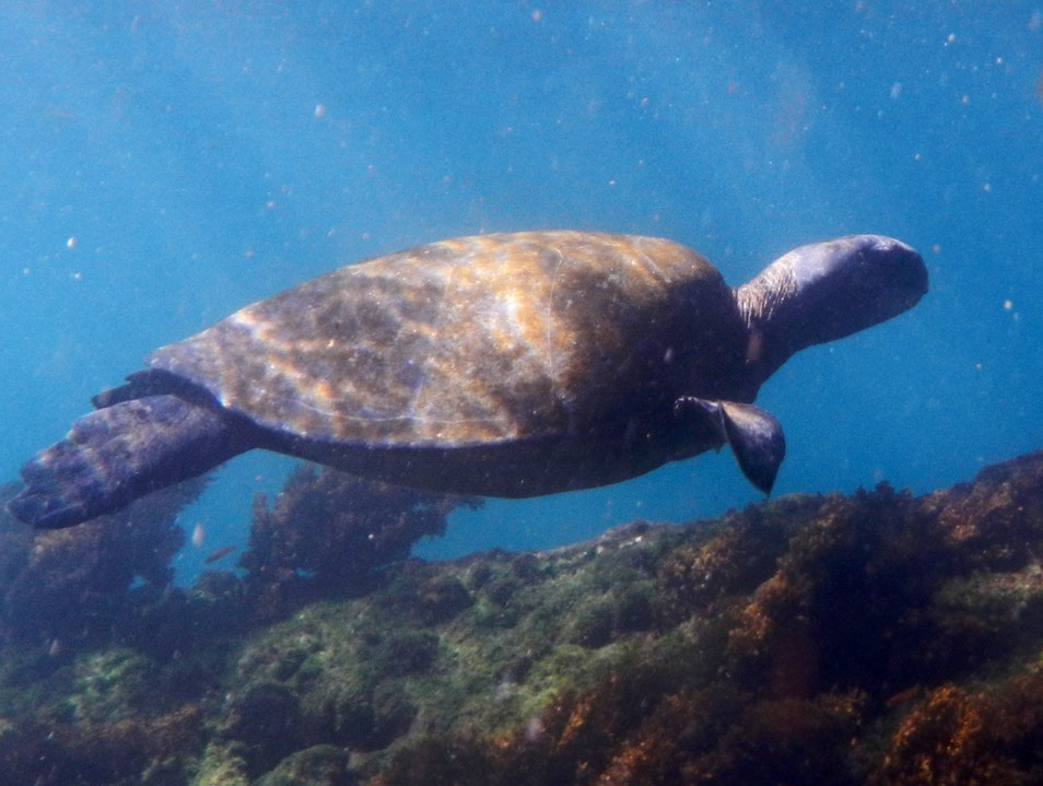 Snorkeling with sea turtles in the Galapogas