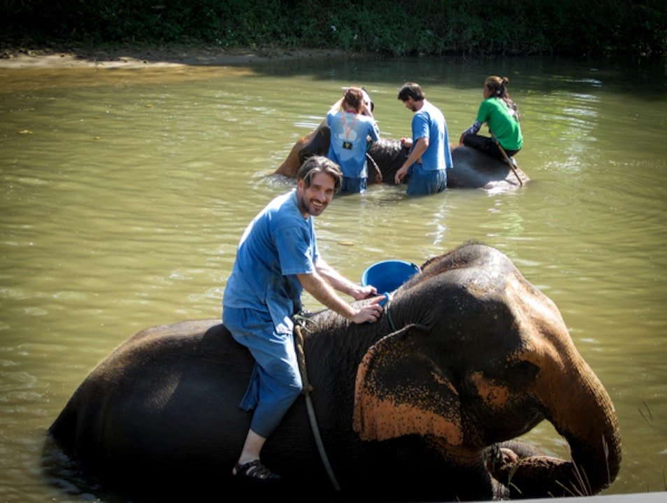 Spend A Day With A Rescued Elephant Chiang Mai  Thailand