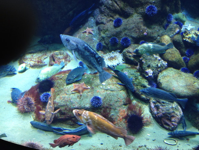 Great Aquarium In San Fran