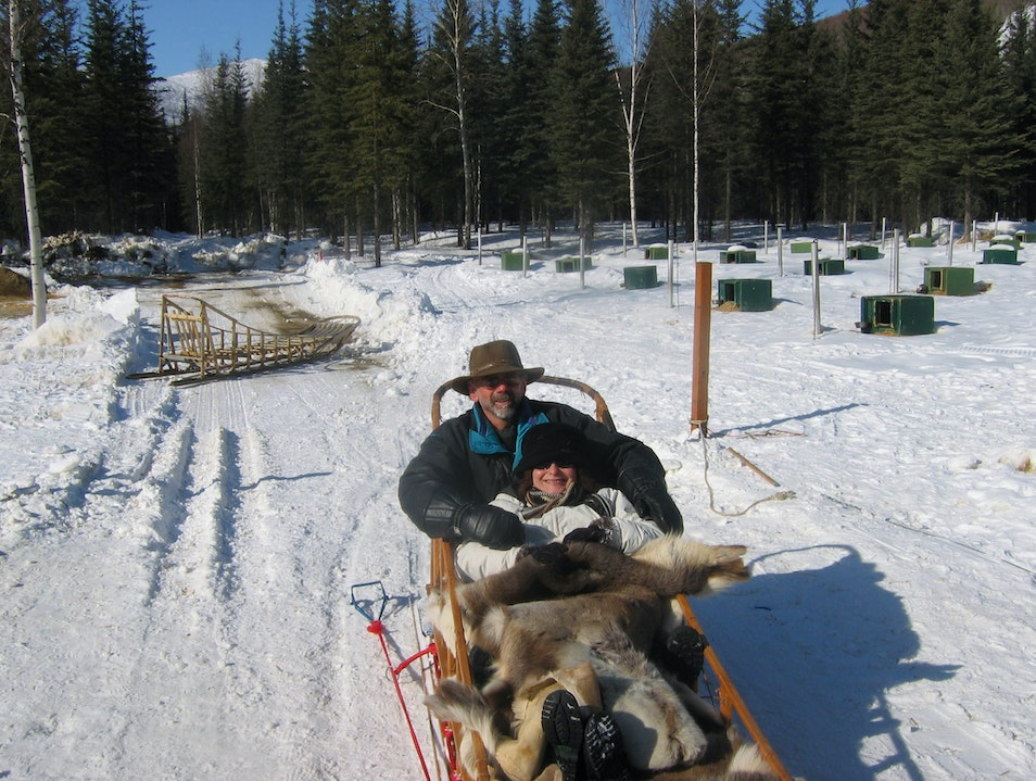 Mushing while waiting for the Northern Lights Fairbanks Alaska United States