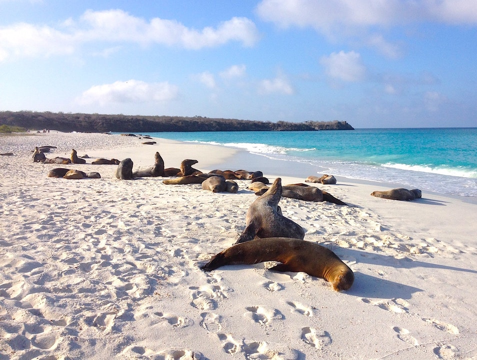 Cruising Around the Galapagos Islands & Observing Wildlife