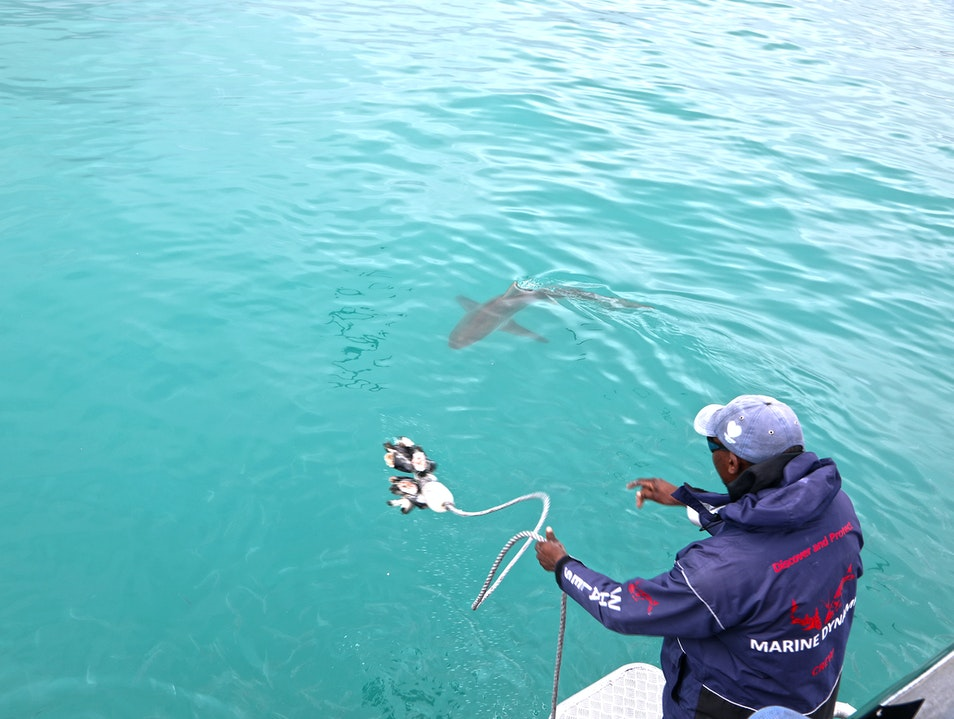 Shark Cage Diving in South Africa Van Dyks Bay  South Africa