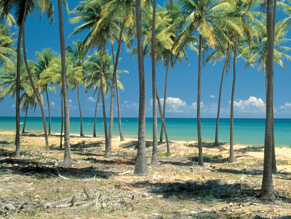 Coconut Palms on Devil's Island   French Guiana