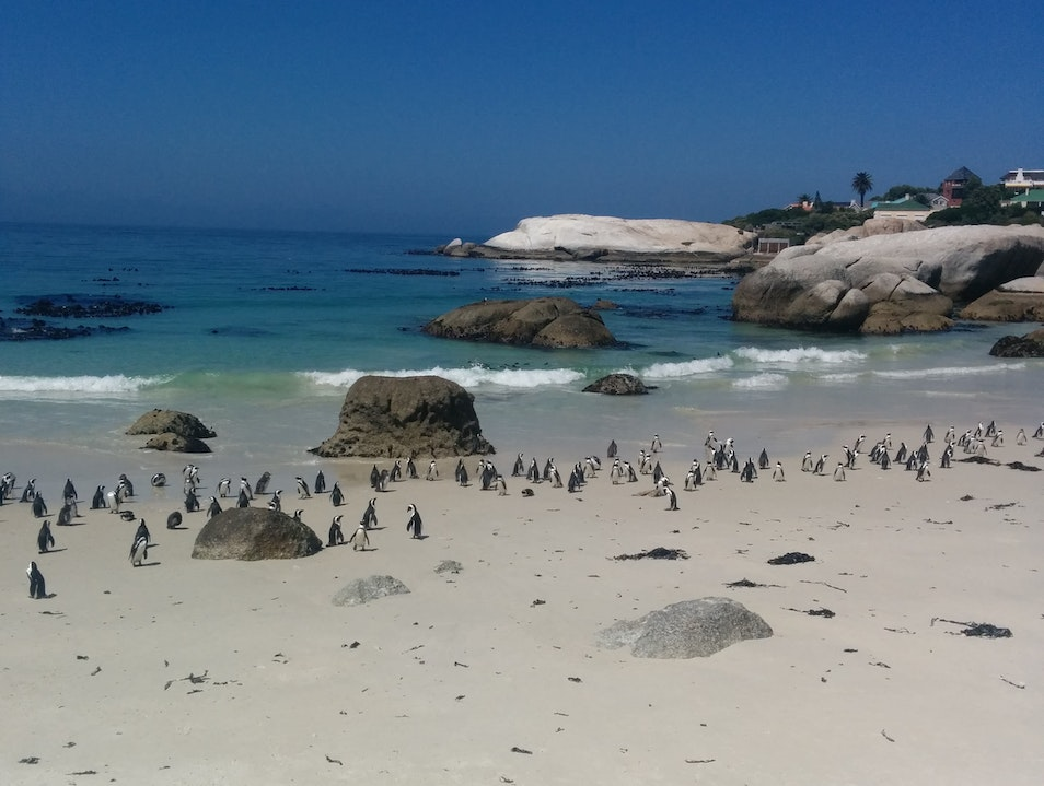Penguin spotting Cape Town  South Africa