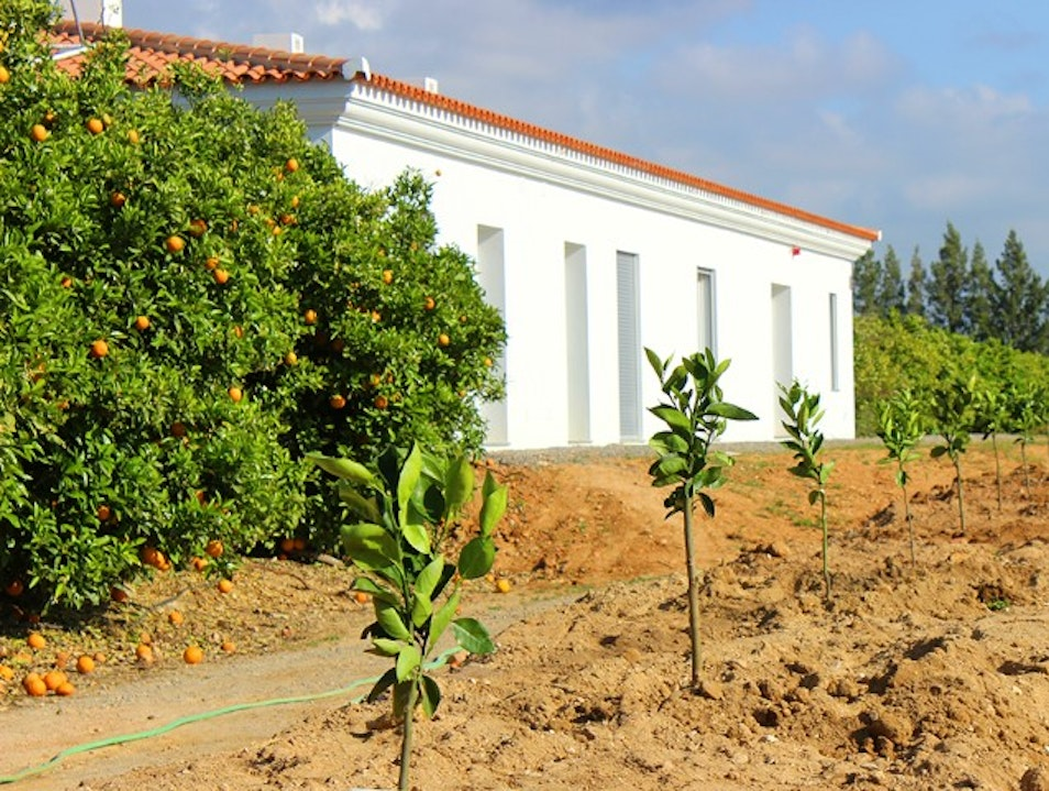 An orange farm hotel in the Algarve Conceição de Tavira  Portugal