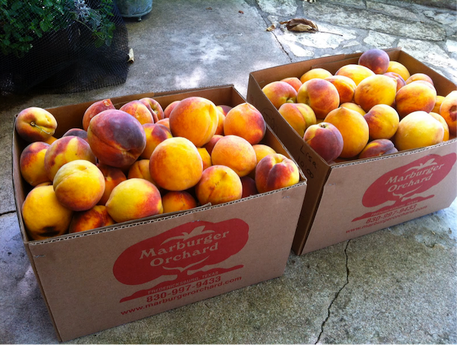 Peach Picking in the Texas Hill Country