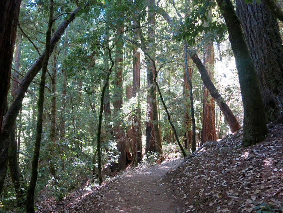 Extensive Hiking in the Santa Cruz Mountains Boulder Creek California United States