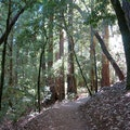 Big Basin Redwoods State Park Boulder Creek California United States