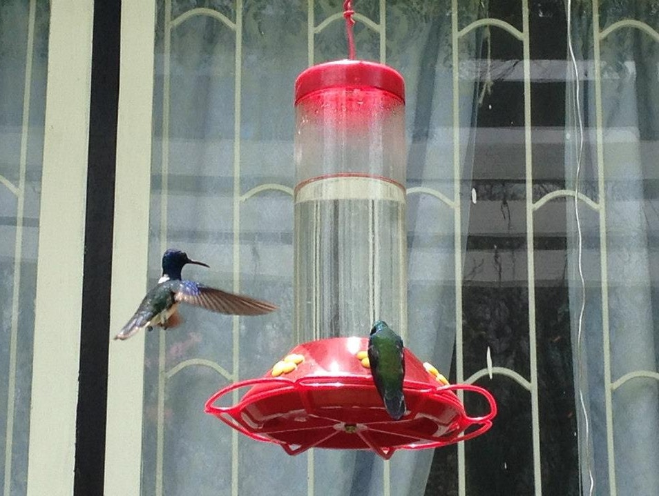 Photographing hummingbirds at Yerette