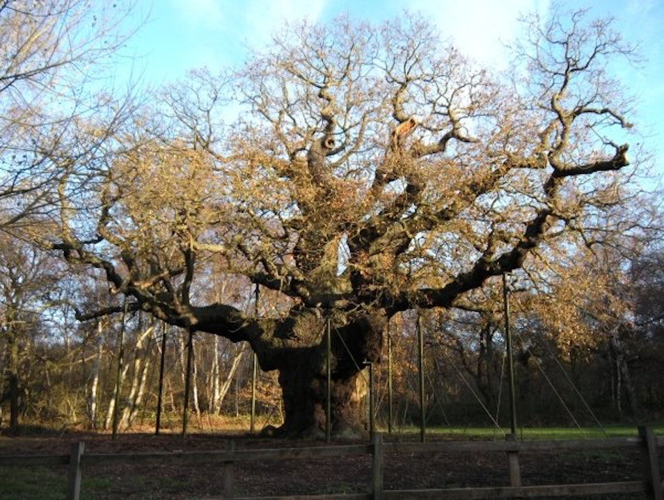 The Major Oak  Bilsthorpe  United Kingdom