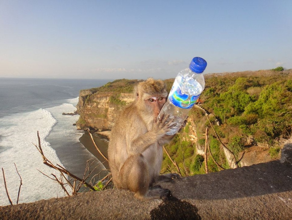Thirsty Monkey Kuta  Indonesia