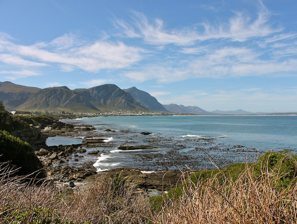 Whale Watching while Dining in Hermanus