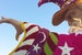 See The Rose Parade Floats After Sleeping In Pasadena California United States