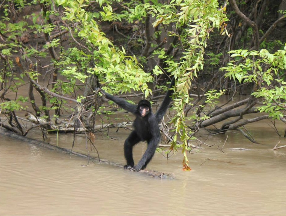 Aqua Expeditions: Amazon River Cruise Maynas  Peru