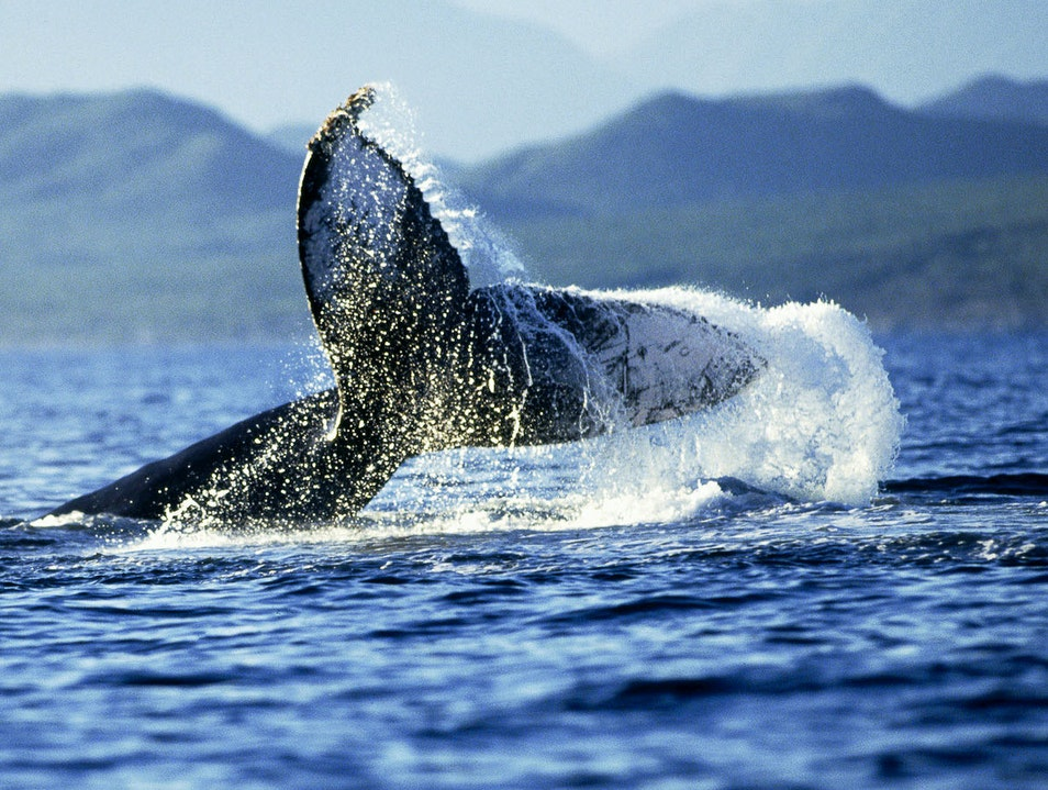Whale-Watching in Los Cabos Cabo San Lucas  Mexico