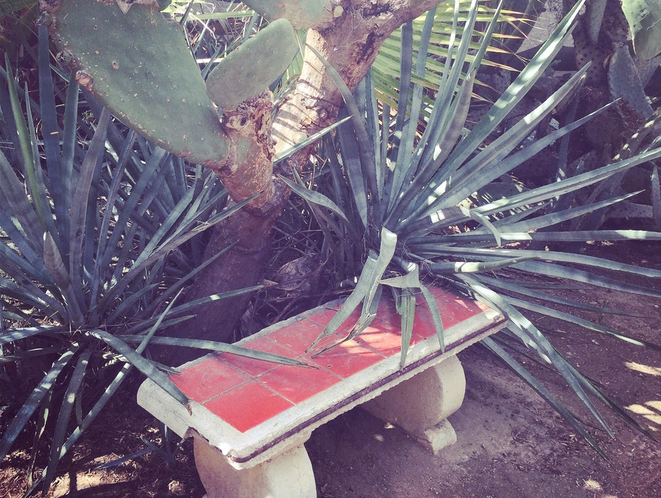 A historic landmark with over 3000 varieties of plants mostly dedicated to cacti
