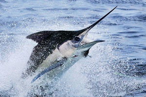 Sportfishing in Puerto Quetzal
