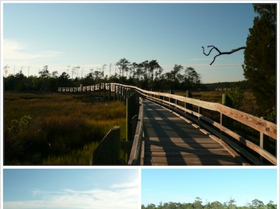 Cedar Point Tideland Recreation Trail Swansboro North Carolina United States