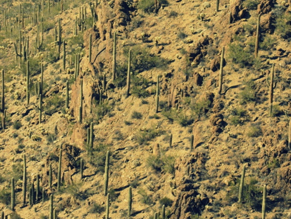 Saguaro-studded walks at Gates Pass, Tucson Tucson Arizona United States