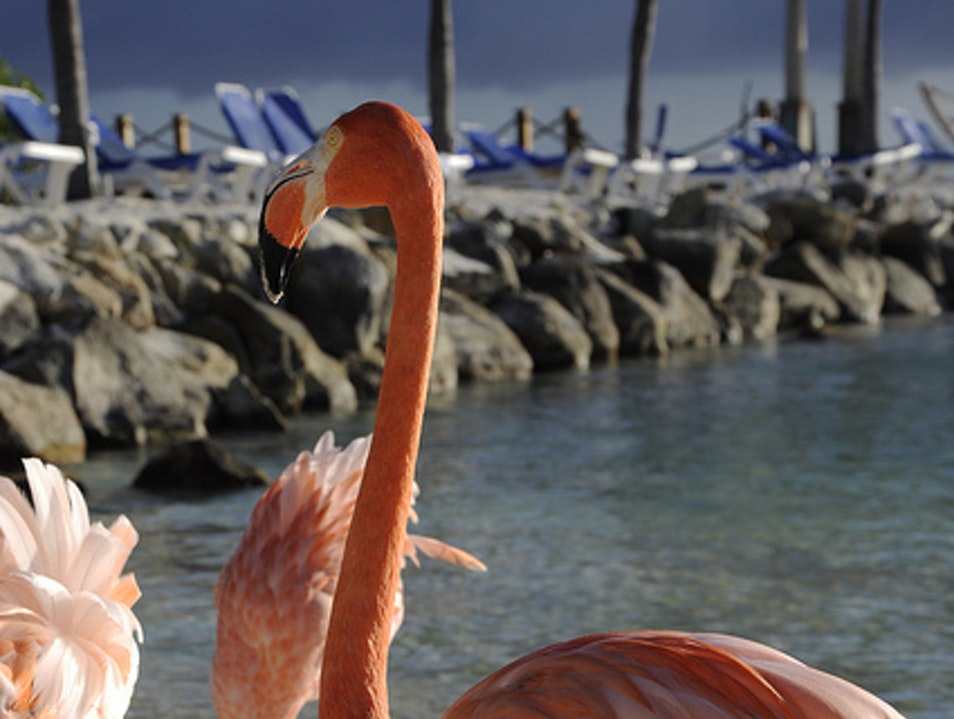 Where to see Flamingos in Aruba Oranjestad  Aruba