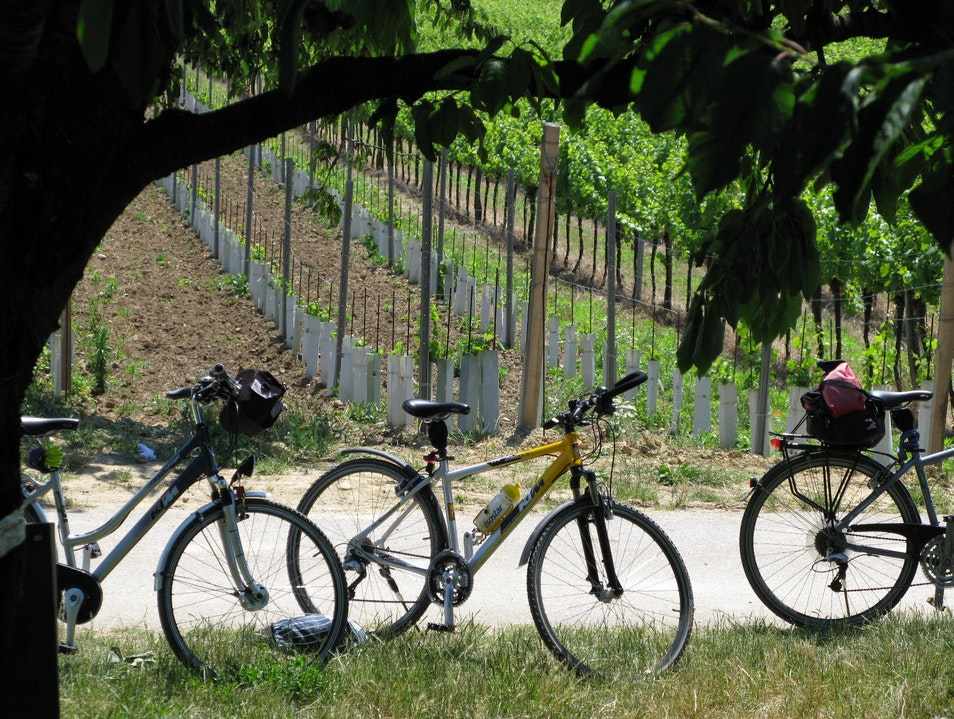 Biking between Castles and Vineyards Langenlois  Austria