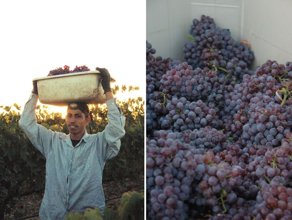 Wine Harvest in Temecula Valley. Temecula California United States