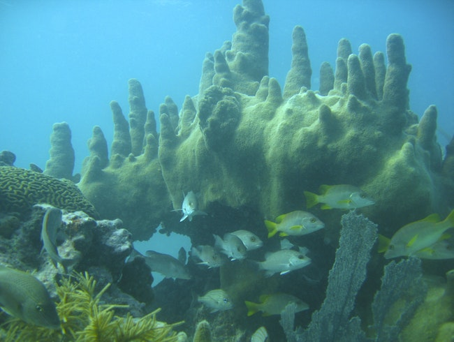 Diving in Key Largo