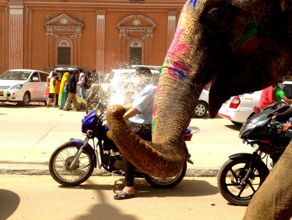An Elephant Spurts in Jaipur