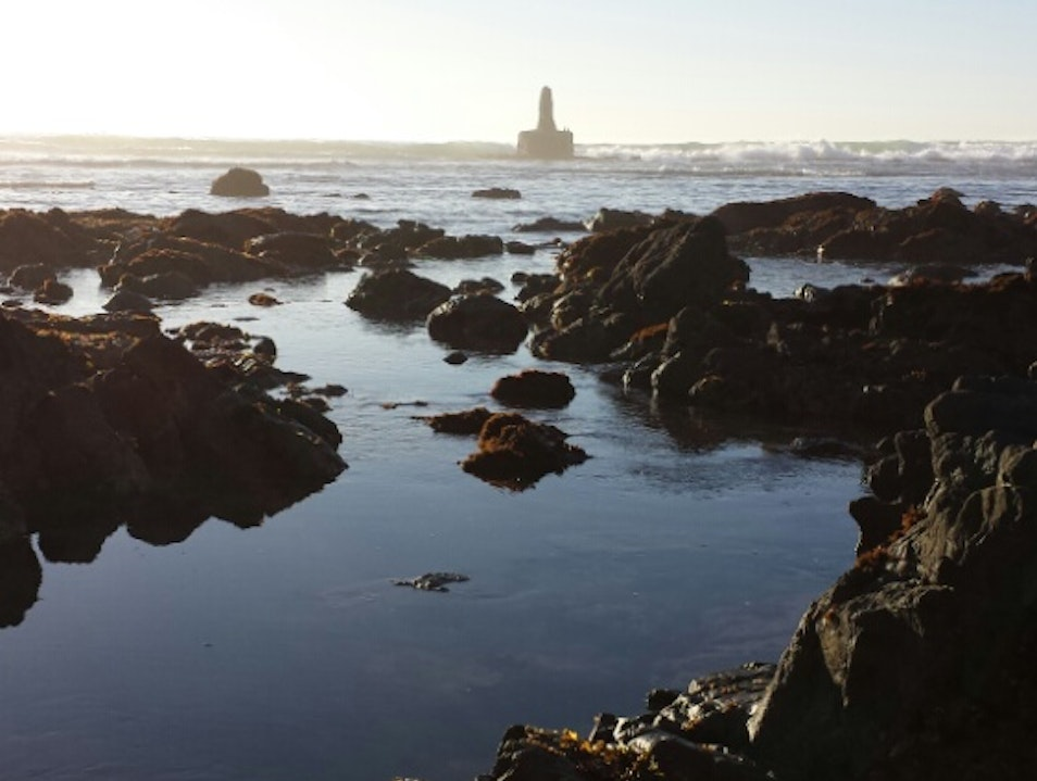Discovering Tide Pools at Moss Beach Moss Landing California United States