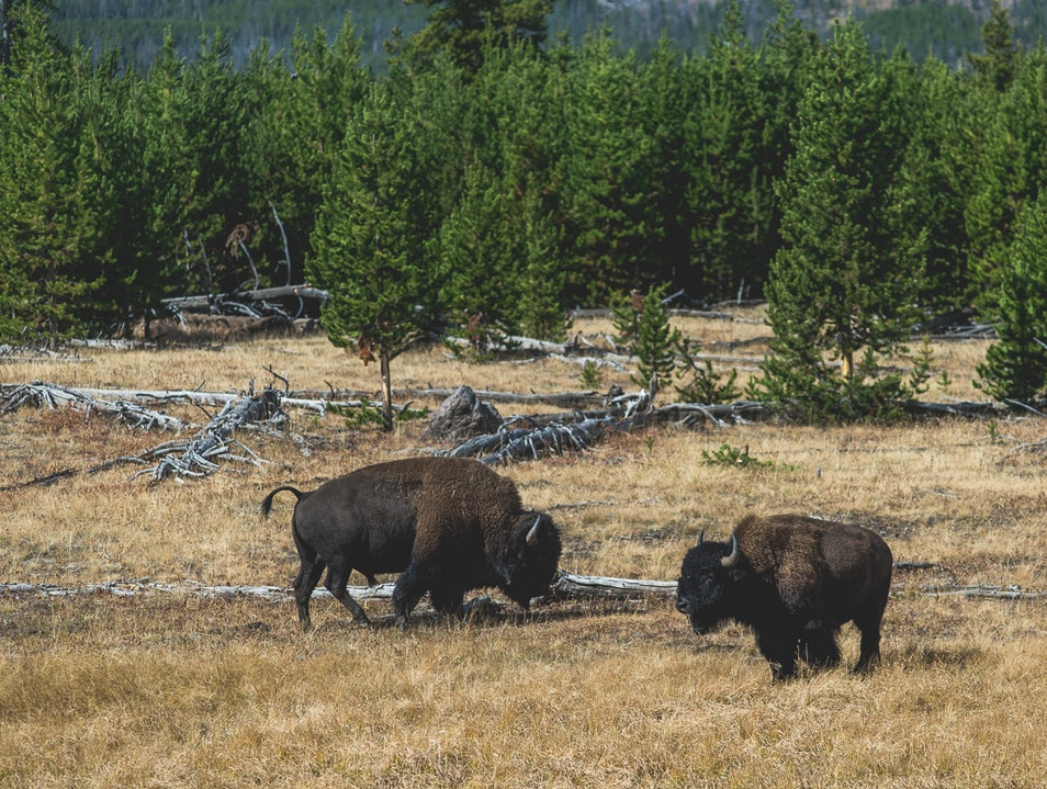 Make New Friends in Yellowstone Yellowstone National Park Wyoming United States