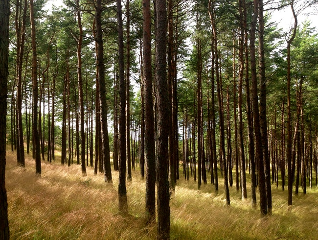Exploring the sand dunes and pine forests of Lithuania's Baltic coast