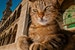 Meet the cats who rule Istanbul Istanbul  Turkey