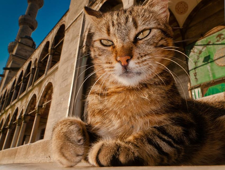 Meet the cats who rule Istanbul