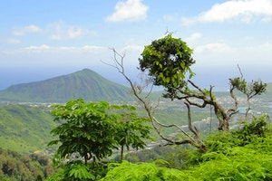 Off the Beaten Path: Hiking around Honolulu